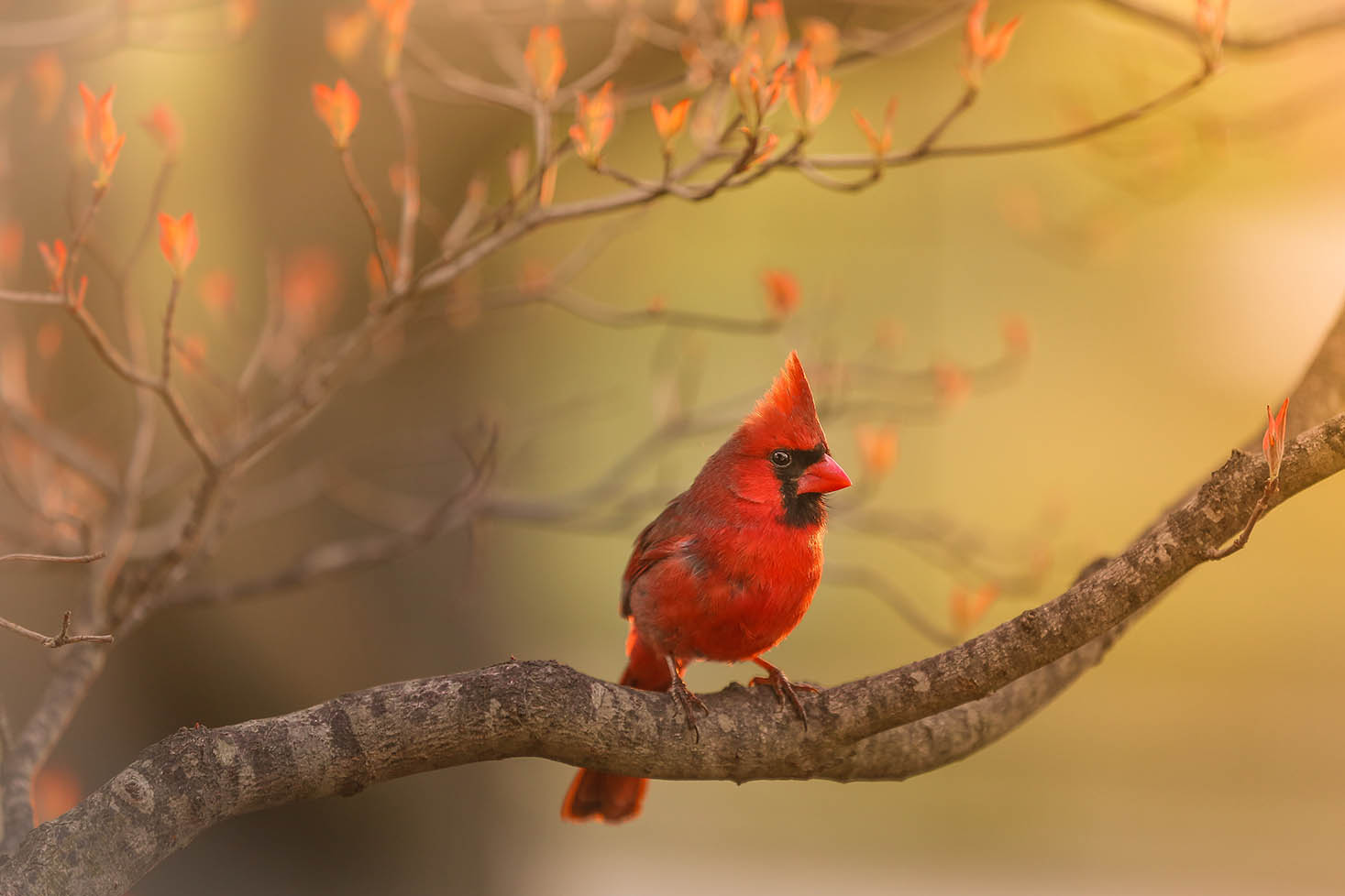 A cardinal sitting on a branch with orange leaves