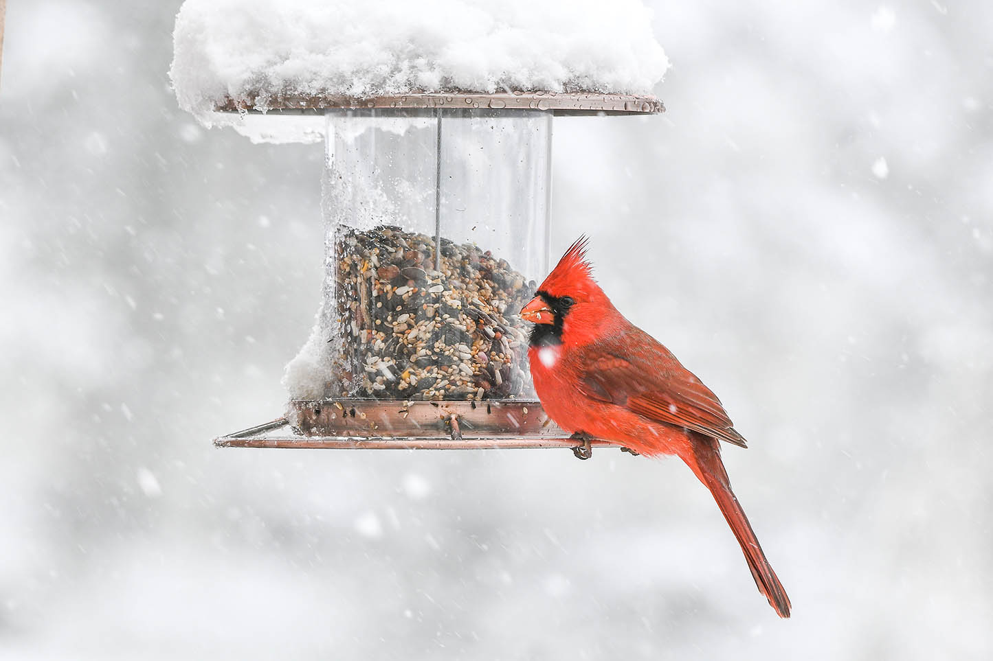 A red cardinal sits perched on a bird feeder during a snow fall